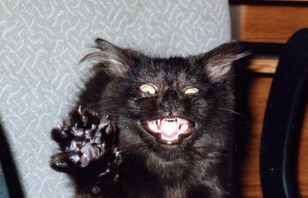 Hissing Cat Sound Free
