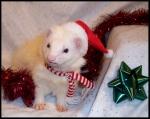 ferret_christmas
