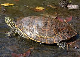 turtle_wax