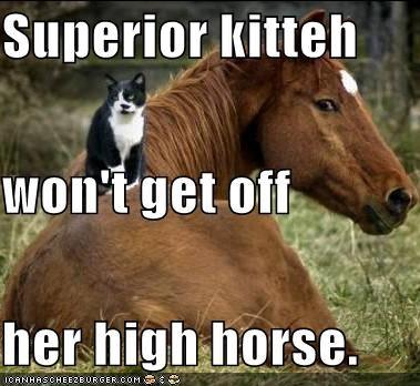 superior kitteh